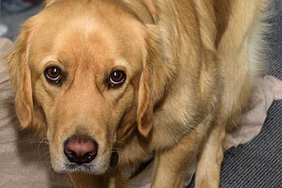 Jessie, Hund von Susanna Gallmann